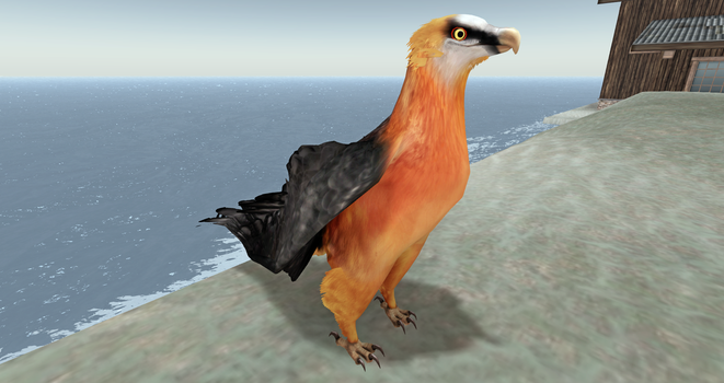 Bearded Vulture Avatar! by Zzri