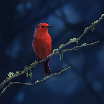 Little Red Bird by Noctualis