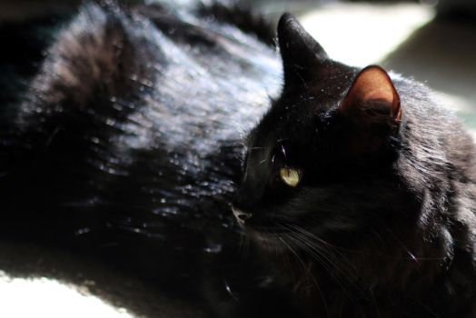 Cat just hanging out in the sun by MoozieBerry