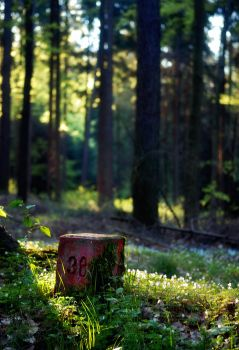 Sunset in the forest 2 by aka-from-saxony