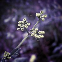 Color Purple by MarinaCoric
