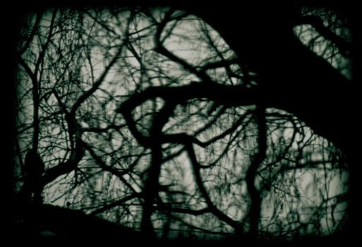 distorted branches by theartofmike