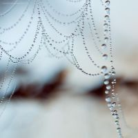 weeping cold morning IV by JoannaRzeznikowska