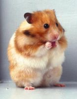 Hamster by R-aw-r