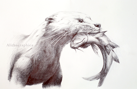 Indian Smooth-coated Otter by Alithographica