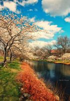 Just a Memory of Spring by MyLifeThroughTheLens