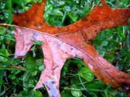 Fall Leaves 5 by Holly6669666