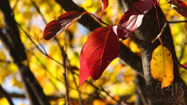 Autumn Leaves 4 by Ranakanth