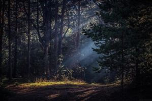Karelian forest_08 by Aderhine