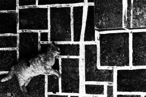 The cat that was curious by horeb
