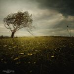 .: Lonely Wind :. by oguzceng