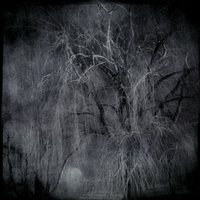 The Night Has a Thousand Eyes by intao
