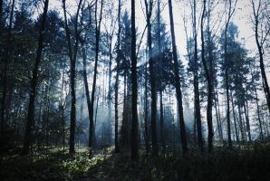 Forest in blue light by Qulithinoren