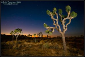Joshua Tree Twilight by juddpatterson