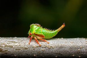 Treehopper by class-pessimist