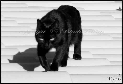 walking like a panther by BlackFriday
