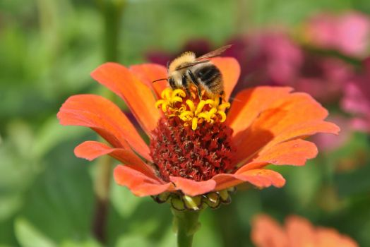 Bee and flower by Anny78