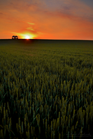 Sunset over the field by Zavorka