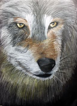Wolf in Colored Pencil by 520playgage