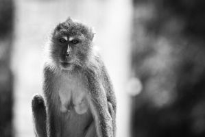 Monkey II by Izam01