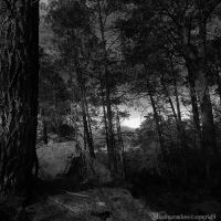 The forest VII by CountessBloody