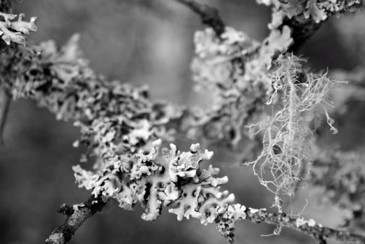 Lichen On Tree by ThePresentTime