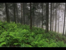 deep in the woods by MindShelves