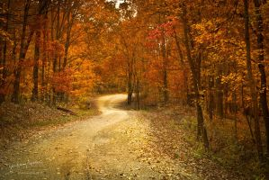 October Road IV by AppareilPhotoGarcon