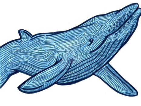 Whale by lonesomeaesthetic